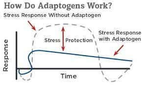 How adaptogens work