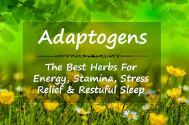 Adaptogens for athletes