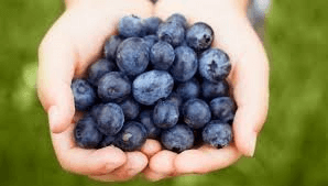 Blueberries extend life
